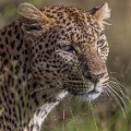 Kruger National Park 1_Big 5