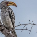 Kruger National Park 2_Birds