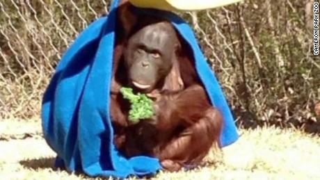 orangutan baby gift registry target moos pkg erin_00013525.jpg
