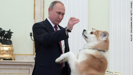 A picture taken on December 7, 2016 shows Russian President Vladimir Putin as he plays with his Yume, an Akita dog, prior to an interview by Nippon Television Network Corporation and Yomiuri Shimbun in the run-up to his official visit to Japan.  / AFP / SPUTNIK / Alexey DRUZHININ        (Photo credit should read ALEXEY DRUZHININ/AFP/Getty Images)