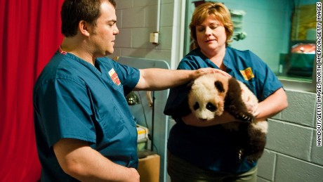 ATLANTA, GA - FEBRUARY 15:  In this handout photo provided by Paramount, Jack Black meets Dr. Hayley Murphy before the naming ceremony of Zoo Atlanta's baby panda February 15, 2011 in Atlanta, Georgia. The panda was named Po in honor of the upcoming film, Kung Fu Panda 2 by Paramount Pictures and Dreamworks Animation. (Photo by Pouya Dianat/Paramount via Getty Images)