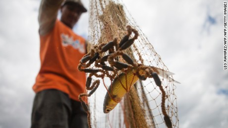 Venezuela fisherman Jose Orticio, 25, shakes his fishing net in the Unare lagoon in Boca de Uchire village, Anzoategui state, northeast of Caracas on July 26, 2013. In Boca de Uchire the fishing profession is passed from generation to generation and is the main economic source of the habitants of this coastal town . AFP PHOTO/Leo RAMIREZ        (Photo credit should read LEO RAMIREZ/AFP/Getty Images)