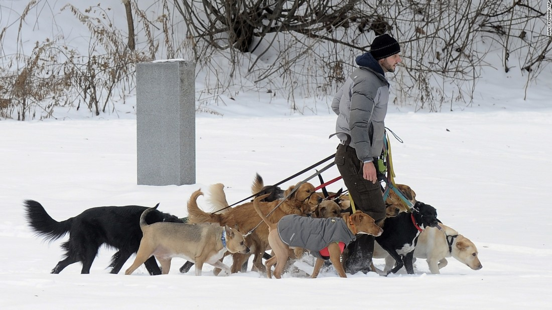 Tim Pink walks 12 dogs through fresh snow at Congress Park in Saratoga Springs, New York.