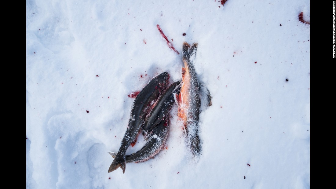 Trout are seen on the ice in Finnmark, a county at Norway's northern tip that is within the Arctic Circle.