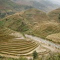 Than Uyen Rice Terraces  - Alesha Bradford