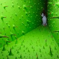 jee young lee new 3