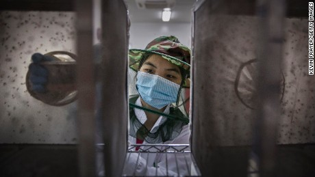 Lab technician Chen Chunping places pupa into a cage in the mass production facility.