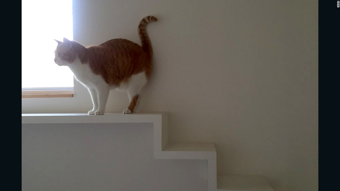 Cat corridors, ledges and stairwells make it easy for the pet to explore.