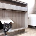 LAAB Small Home Smart Home Cats Hong Kong 5