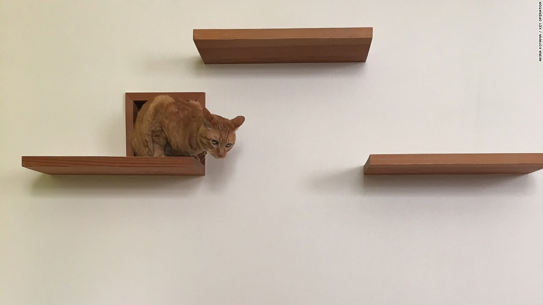This nifty nook in the wall, provides the pet cat a place to hide