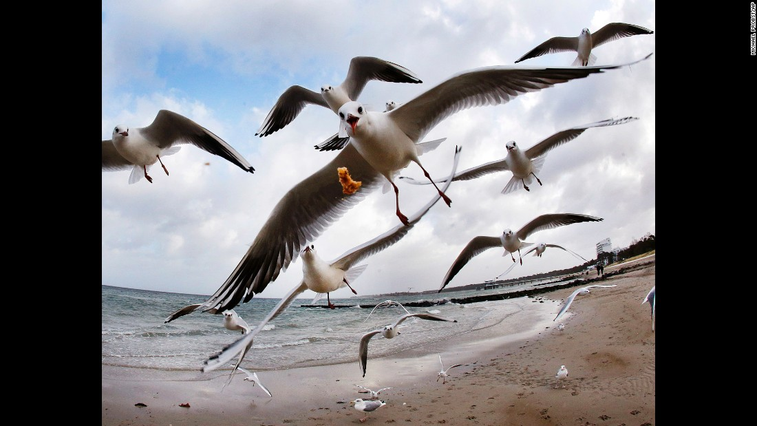 Sea gulls take flight at the Baltic Sea beach of Timmendorfer Strand, Germany.