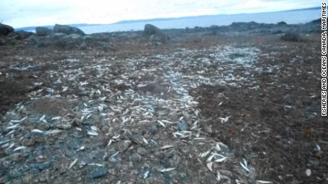More than 10,000 marine animals have been found dead on the west coast of Nova Scotia.