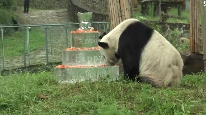 pan pan panda vo_00000000