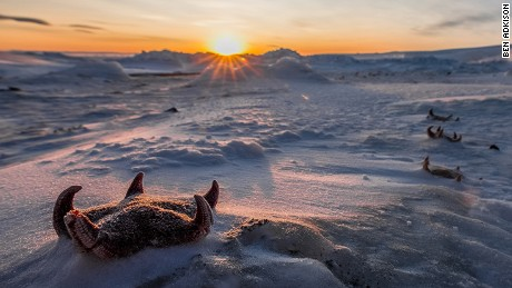 Starfish washed up on land and froze at Cape Evans on Ross Island, Antarctica.