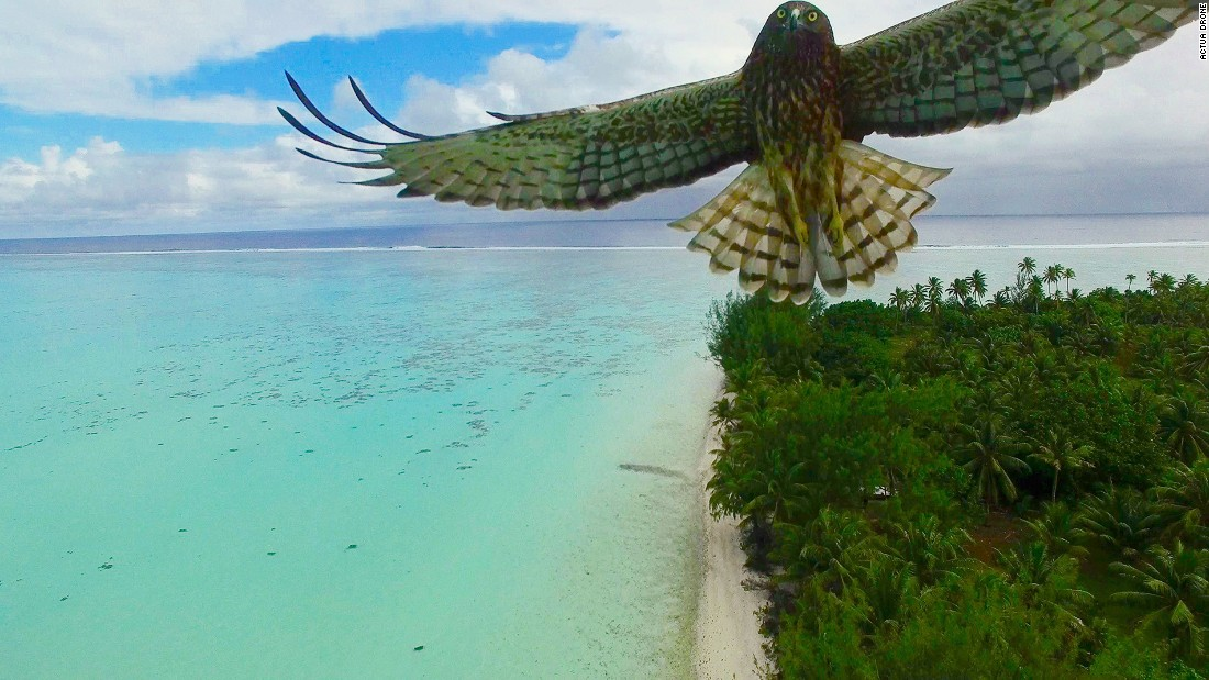 "<strong>Bird attack: </strong>""A magnificent bird attacks my drone,"" says photographer Actua Drone of this  image shot in French Polynesia."