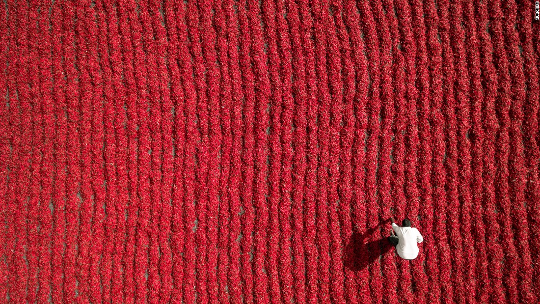 <strong>Red chili farmer: </strong>Based in Guntur, India, Dronestagram user Aurobird submitted this picture of a farmer in a field of red chilies.