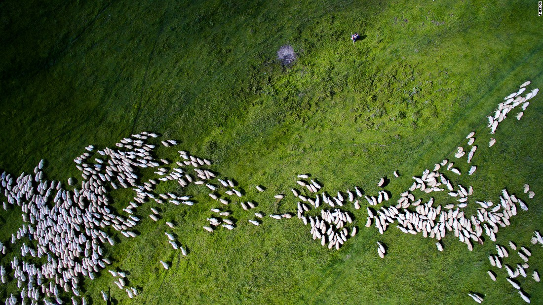 <strong>Swarm of sheep: </strong>From a distance they might look like sesame seeds, but this is in fact a herd of sheep in Marpod, a small commune in Romania.
