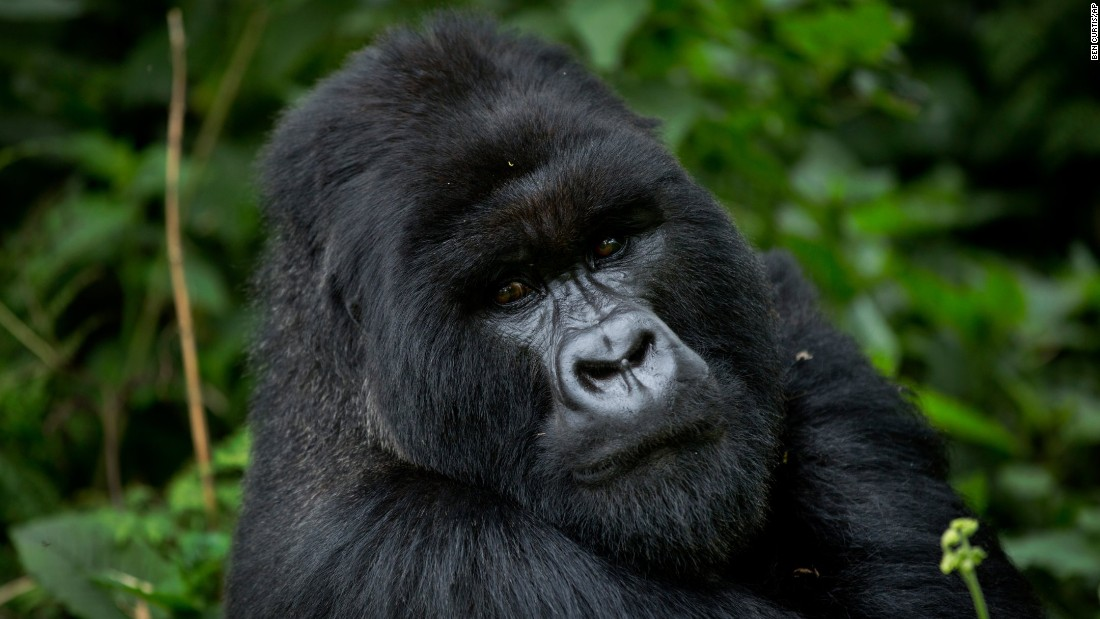 <strong>Rwanda -- </strong>The site of a horrific genocide in 1994, this African country is now one of the safest in the region. It's becoming known for its conservation work to protect wild gorillas, rhinos and lions, which is helping to boost tourism.