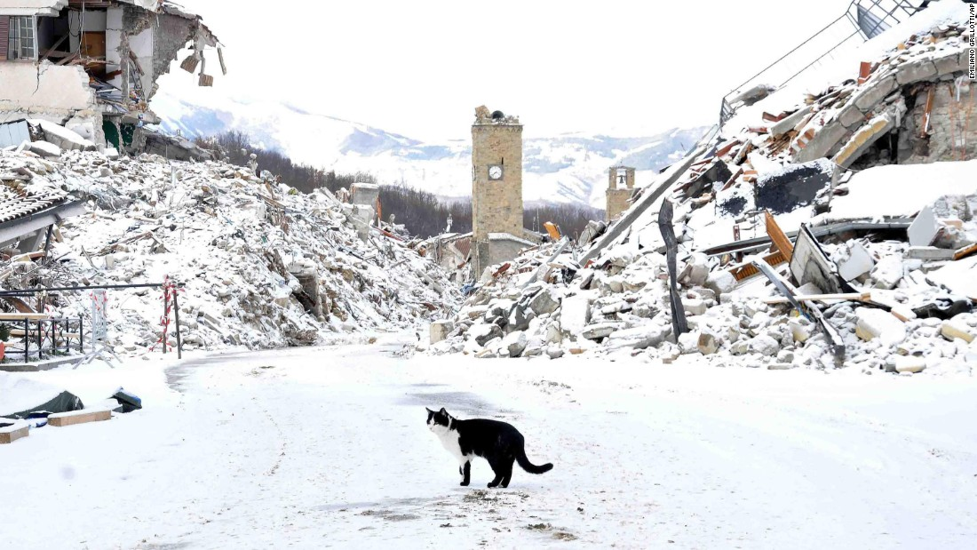 "A cat wanders amid rubble in Amatrice, Italy, on Thursday, January 5. The town <a href=""http://www.cnn.com/2016/10/30/europe/italy-earthquake/"" target=""_blank"">was battered by earthquakes</a> in August and October."