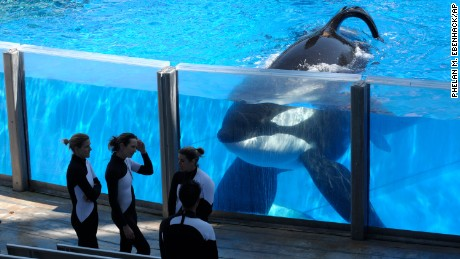 Killer whale at center of 'Blackfish' dies