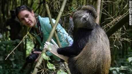 Rwanda: Get a close-up look at primates.