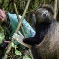 Rwanda-Bisate-Lodge-(Dana-Allen)