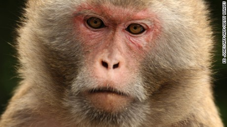 Chinese company implants 3-D printed blood vessels into monkeys