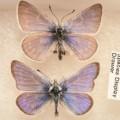06 cnnphotos extinct species RESTRICTED
