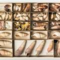 07 cnnphotos extinct species RESTRICTED
