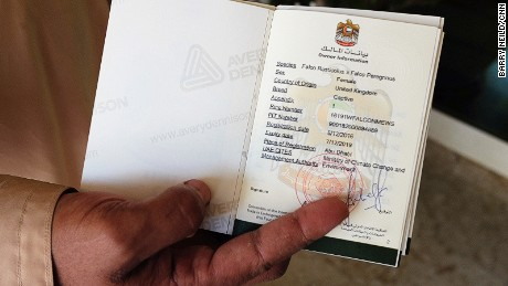 Inside the falcon's passport, it details the bird's ID number which matches the ID ring on its leg.