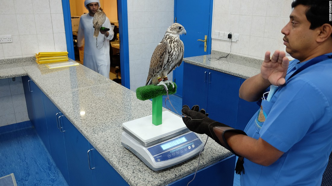 <strong>Falcon triage:</strong> The center runs much like a human hospital. On arrival, the birds are weighed and assessed for symptoms or injuries.