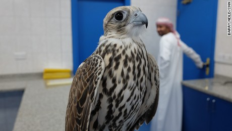 "Dr. Margit Gabriele Müller says falcons have ""magic"" eyes."