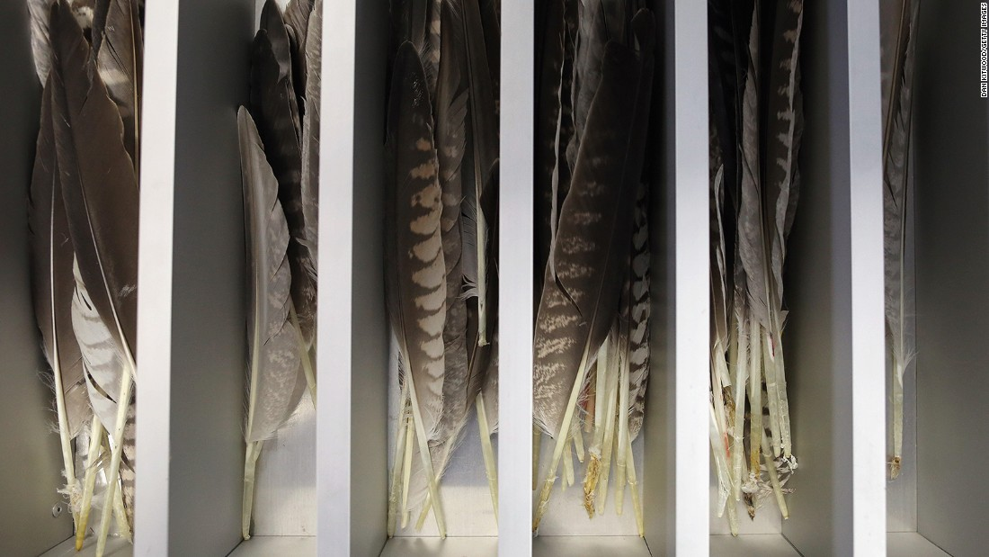 <strong>Broken wings:</strong> One common procedure is repairing damaged feathers. The hospital keeps a drawer full of spares of different sizes and colors, which can be splinted onto damaged plumage.