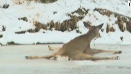 deer on ice rescue moos pkg erin_00005809.jpg