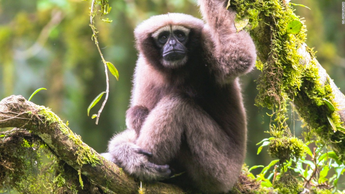 Star Wars-loving scientists want to name new gibbon species 'Skywalker'