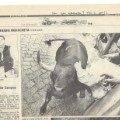 Tripp Hock gored newspaper scan