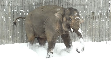 Elephant Oregon Zoo snow 4