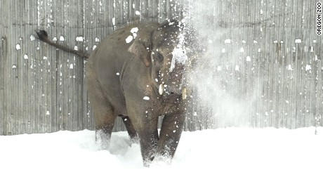 Elephant Oregon Zoo snow 6