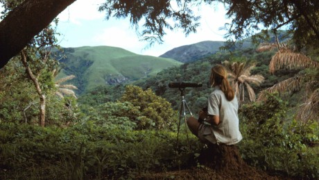 In her early days at Gombe, Jane Goodall spent many hours sitting on a high peak with binoculars or a telescope, searching the forest below for chimpanzees.