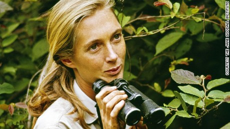 A young Jane Goodall in Gombe National Park.