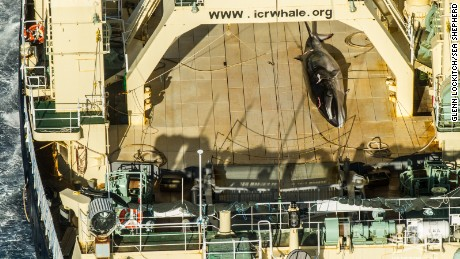 The carcass of a minke whale is seen on a ship. Sea Shepherd says it caught Japanese poachers trying to cover up the whale.