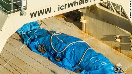 Sea Shepherd says it caught a Japanese vessel covering a whale carcass in a blue tarp.
