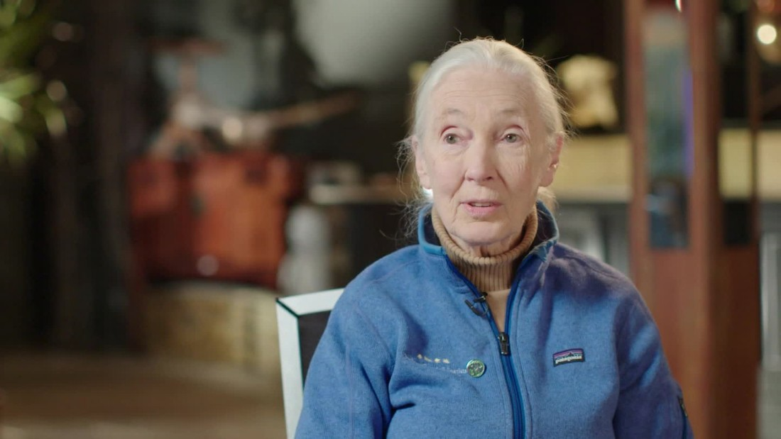 leadership profile, jane goodall essay Kids learn about jane goodall's biography  she was eventually kicked out  when frodo, a male chimp who didn't like jane, became the leader of the troop.