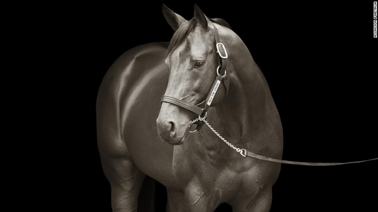 Photographing the world's best thoroughbreds