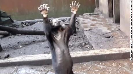 bandung zoo bear