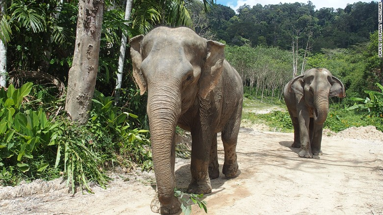 Thailand's care home for elephants