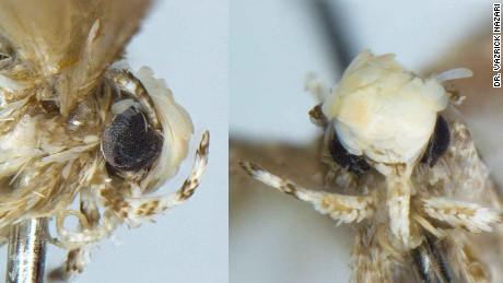 Make A-moth-ica Great Again!