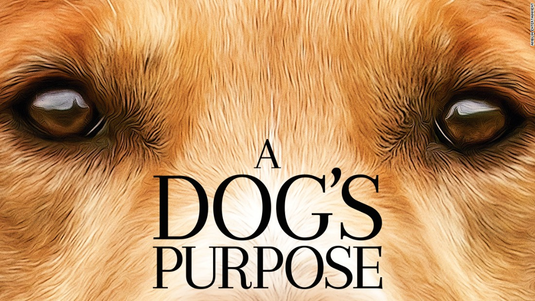 a dog s purpose faces backlash after disturbing video surfaces