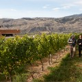 undiscovered wine regions Burrowing Owl Estate Winery, Oliver, Okanagan Valley_by Canadian Tourism Association