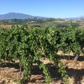 undiscovered wine regions Marche Italy_by Ciu Ciu winery (2)